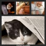 curiousasacathy-54d8a3d8v1_site_icon-e1523101380254