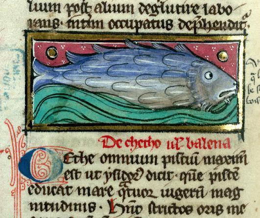 whale-cetus-balena-cantimpre-valenciennes-BM-ms-320-f-111v